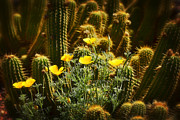 Saija  Lehtonen - Golden Poppies and Torch Cactus