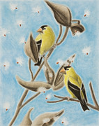 Jeanette Kabat - Goldfinch on Seed Pod