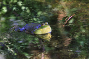 Amphibians Photos - Good Vibrations by Donna Kennedy