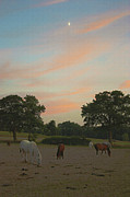 Terri Waters Prints - Grazing Horses at Sunset Print by Terri  Waters