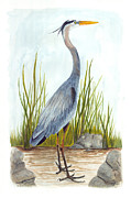 Great Blue Heron Paintings - Great Blue Heron by Cindy Hitchcock