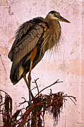 Debra and Dave Vanderlaan - Great Blue Heron
