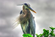 Dennis  Baswell - Great Blue Heron