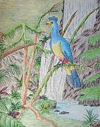 Jeanette Kabat - Great Blue Turaco
