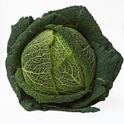 Bernard Jaubert - Green cabbage