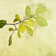 Tree Leaf Art - Green Foliage Series by Priska Wettstein