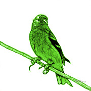 Goldfinch Digital Art Prints - Green Lesser Goldfinch - 2235 F S M Print by James Ahn
