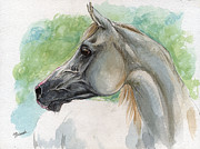 Drawing Painting Originals - Grey arabian horse watercolor painting 27 02 2013 by Angel  Tarantella