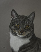 Animals Pastels Prints - Grey cat Print by Veikko Suikkanen