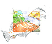 Moran Mixed Media Prints - Grouper with Snappers Print by Amber M  Moran