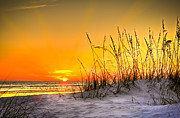 Sea Oats Prints - Gulf Sunset Print by Marvin Spates
