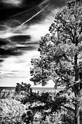 Northern Colorado Photo Prints - Half Tree Print by John Rizzuto