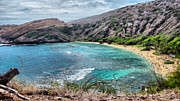Cheryl Young - Hanauma Bay