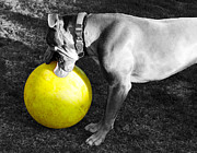 Pitty Posters - Hank and His Big Yellow Horse Ball Poster by Janice Rae Pariza