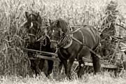 The Agricultural Life Prints - Harvest Time Print by Michael Allen
