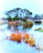 Dan Carmichael - Hatteras Wetlands on the Outer Banks