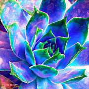Flower Photographs Prints - Hens and Chicks series - Touches of Blue  Print by Moon Stumpp