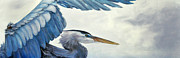 Great Blue Heron Paintings - Heron in Flight by Eve McCauley