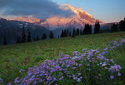 Mt Rainier Photos - Hidden Majesty by Mike  Dawson