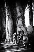 Banyan Tree Framed Prints - Hindu Shrine Framed Print by Tim Gainey