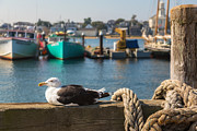 Seagull Metal Prints - Home Sweet Home Metal Print by Bill  Wakeley