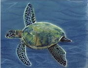 Sea Life Pastels Prints - Honu Print by Michaeline McDonald