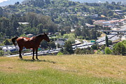 Wingsdomain Art and Photography - Horse Hill Mill Valley California...