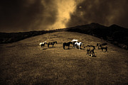 Wingsdomain Art and Photography - Horses of The Moon Mill Valley...
