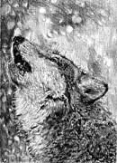 Faces Drawings - Howling Gray Wolf by J McCombie