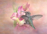 Angie Vogel - Hummingbirds Gladiola