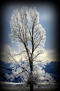 Snowstorm Prints Prints - Ice Glow Print by C Ray  Roth