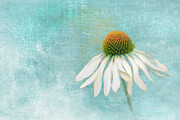 Textured Florals Prints - Iced Print by Reflective Moments  Photography and Digital Art Images