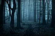 Sandra Roeken - In the dark spooky forest