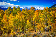 Fall Colors Autumn Colors Posters - Independence Pass Autumn Colors Poster by James Bo Insogna