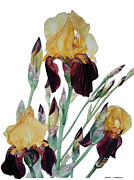 Iris Framed Prints - Iris Beethoven Romance in Fa major Framed Print by Greta Corens