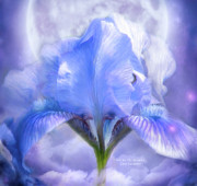 Bearded Iris Posters - Iris - Goddess In The Moonlite Poster by Carol Cavalaris