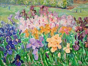 Horticultural Originals - Irises at Wisley by Elinor Fletcher