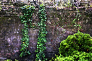 Jeff Holbrook - Ivy and Brick