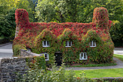Outdoor Digital Art Posters - Ivy Cottage Poster by Adrian Evans
