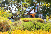 Wine Country Prints - Jack London Countryside Cottage And Garden 5D24570 Print by Wingsdomain Art and Photography