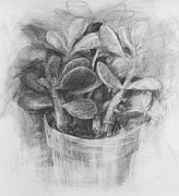 Potted Drawings Metal Prints - Jade Metal Print by Steve Dininno
