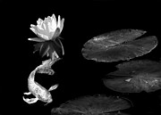 Jennie Marie Schell - Japanese Koi Fish and Water Lily Flower...