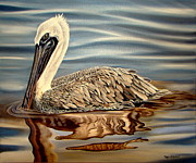 Pylon Paintings - Juvinille Pelican by Phyllis Beiser