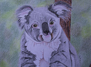 Cuddly Drawings Prints - Koala Print by Carol De Bruyn
