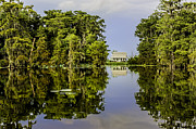 Louisiana Swamp Photos - Lake View by Janet Fikar