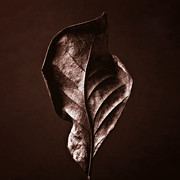 Fall Photographs Posters - LEAF - Red Brown Closeup Nature Photograph Poster by Artecco Fine Art Photography - Photograph by Nadja Drieling