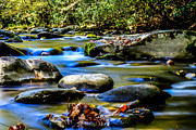Gatlinburg Tennessee Prints - Leaves on a Rock Print by David Morgan