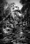 Photo Manipulation Photo Framed Prints - Lily Pond I Bw Framed Print by Anita Lewis