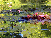 Water Digital Art Originals - Lily Pond in Sunlight by John Lautermilch