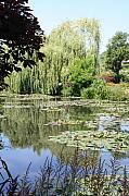 Lily Pond - Monets Garden - France Print by Christiane Schulze